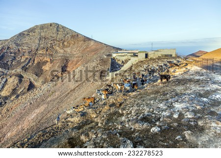 flock of goats in the mountains of a cheese diary - stock photo