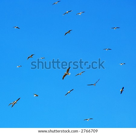 Flock of gull fly high - stock photo