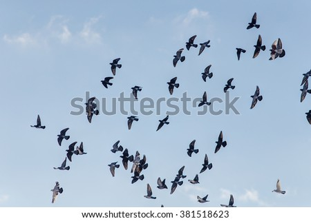 flock of pigeons flying in the sky - stock photo