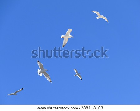 Flock of sea gulls in action in blue sky - stock photo