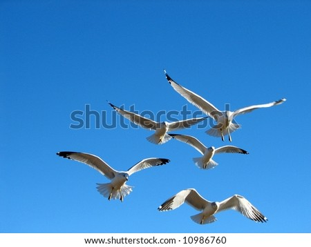 Flock of Seagulls - stock photo