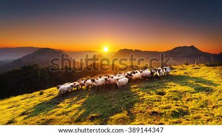 Flock of sheep in Saibi mountain - stock photo