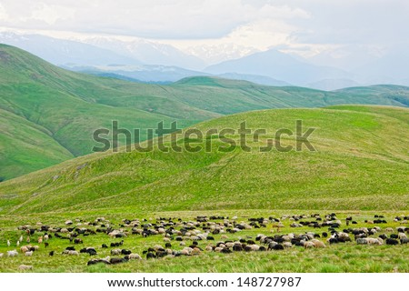 flock of sheep is grazed on a pasture in mountains - stock photo