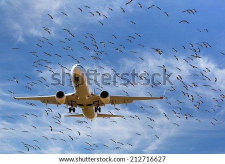 flock of storks and aircraft  - stock photo