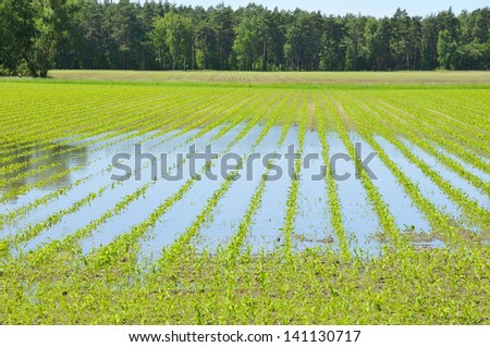 Flood flooded field. - stock photo