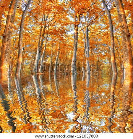 Flood in the forest at fall. - stock photo