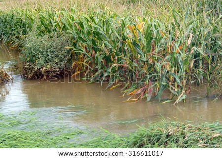 Flooded corn field - stock photo