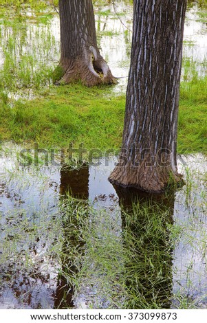 Flooded fields after torrential rain with trees in the foreground - stock photo
