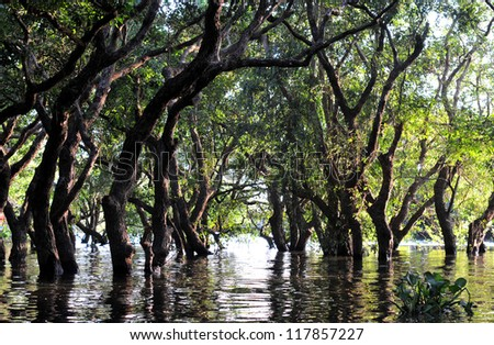 flooded forest of mangrove trees - stock photo