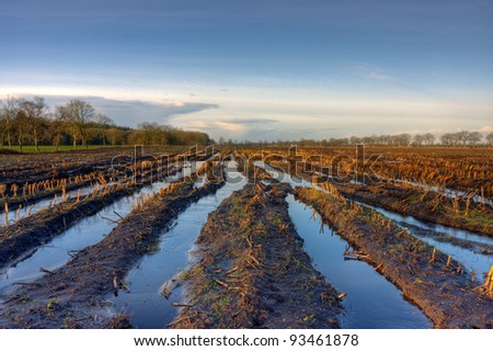 Flooded maize field - stock photo