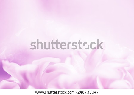 Floral abstract background, soft focus - stock photo
