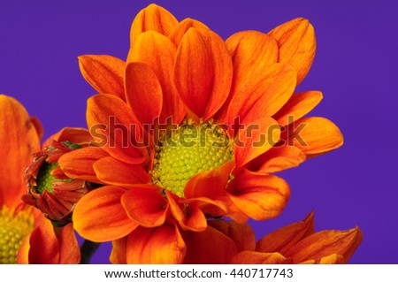 Floral arrangement isolated over a purple background - stock photo