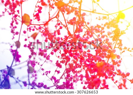 Floral art - stock photo