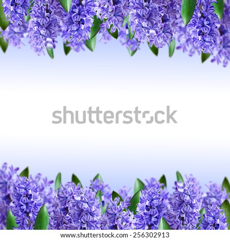 Floral background and a bouquet of hyacinths - stock photo