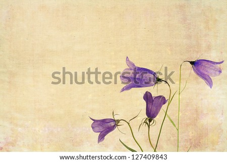 Floral background image and useful design element - stock photo