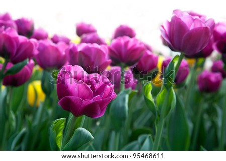 Floral Background. On a white background. - stock photo