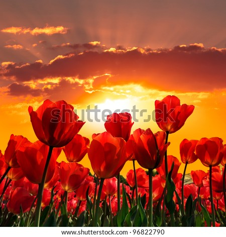 Floral Background. Sunset. Landscape. - stock photo