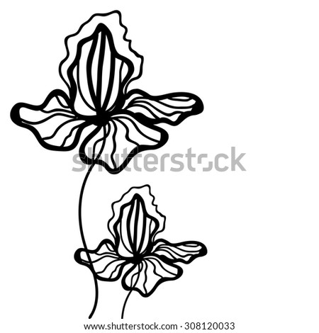 Floral  background with iris. Black and white pattern with  linear flowers.. Linear art. Hand drown texture - stock photo