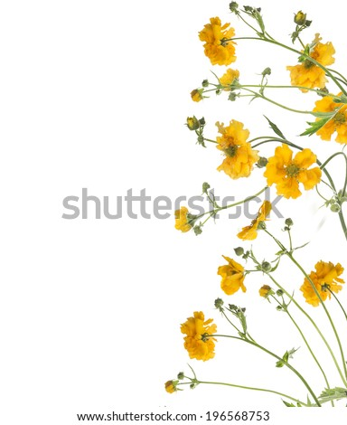Floral border of  yellow flowers, isolated on white background - stock photo