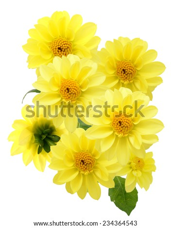 floral bouquet of yellow dahlia flowers on a white background - stock photo