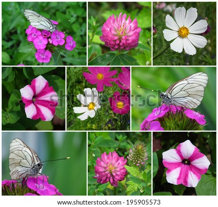 Floral collage. Flowers and butterflies. - stock photo