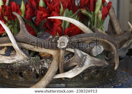 Floral composition with deer antlers - stock photo
