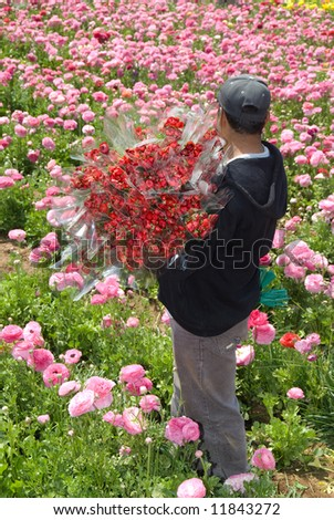 Floral harvester picks up fresh bundles of flowers to be delivered to florist shops.  This is one stage early on in the process for delivering freshly cut flowers to flower shops around the area. - stock photo