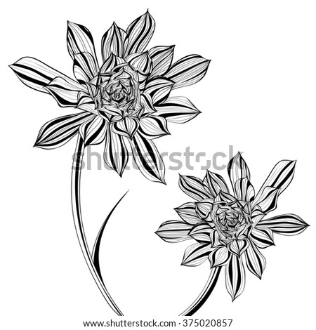 Floral Illustration of Aeonium Tree Flower in Black and White - stock photo