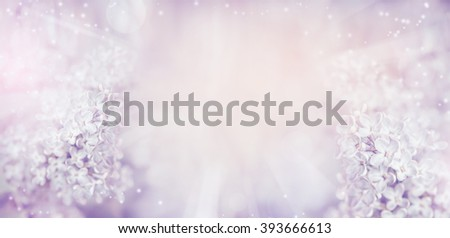 Floral nature background with beautiful light pastel lilac flowers.  Lilac blooming in garden or park, banner - stock photo