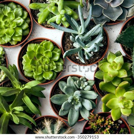 Floral pattern. Plenty of succulents.  - stock photo
