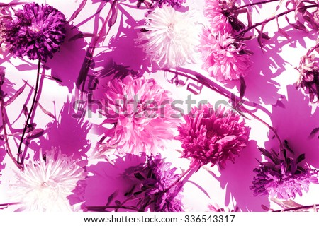 Floral seamless pattern with blossom Asters on a light green backdrop. Gently vintage floral template. Realistic artistic pattern - Photo Collage abstract background. - stock photo