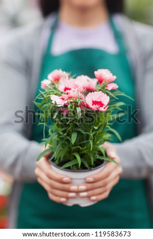 Florist holding and showing a flower - stock photo