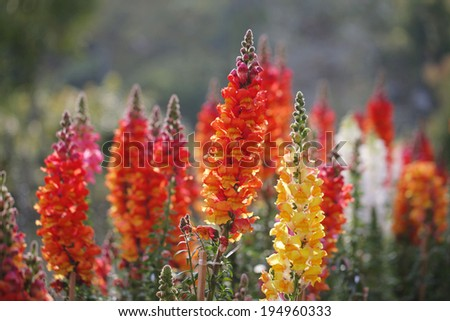 flower 1 - stock photo