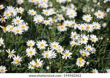 flower 4 - stock photo