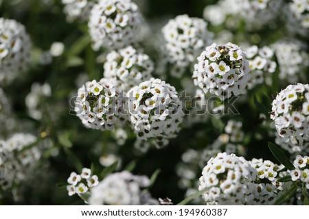 flower 20 - stock photo