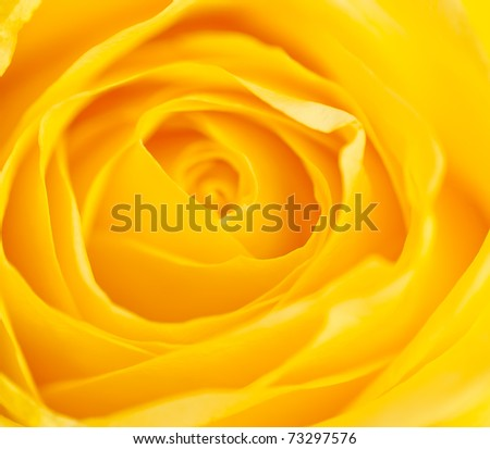 Flower a close up - stock photo