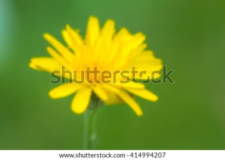 Flower / A dandelium flower over blurred green background / dandelion / single dandelion with blurred green background - stock photo