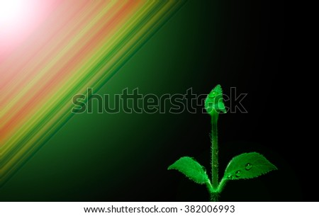 Flower. Abstract background. On the leaves of the flower drops of dew. To the background and the image of the flower used of abstract color and light effects, night club.   - stock photo