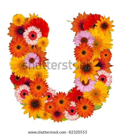 Flower alphabet isolated on white. Letter U - stock photo