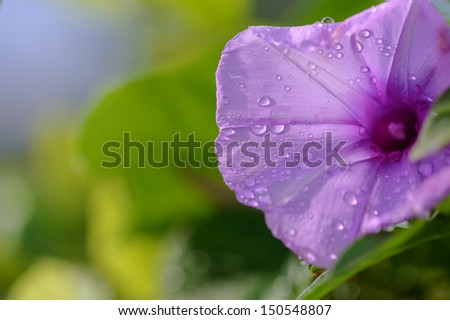 flower and drop - stock photo