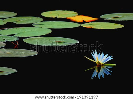 flower and lake - stock photo