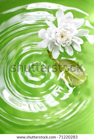 Flower and leaf flowing in the green liquid as a symbol of nature. Shallow depth of field added by macro lens for natural view - stock photo