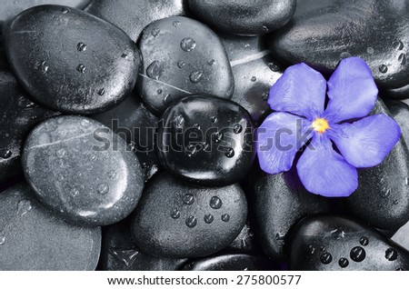 Flower and stones - stock photo
