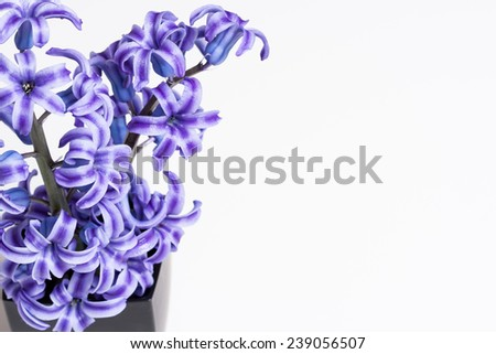 Flower arrangement in black vase with with white background. - stock photo