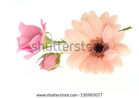 Flower arrangement of a rose and the Barberton daisy - stock photo