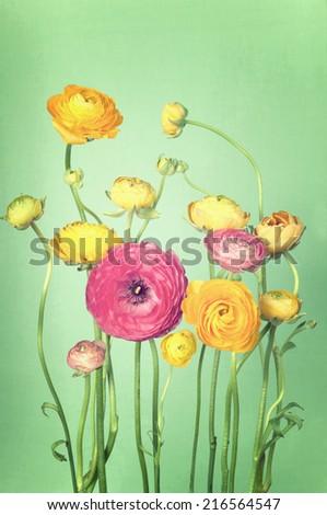 Flower arrangement of colorful ranunculus vintage background - stock photo