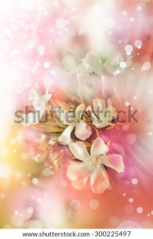 Flower background, Beautiful little white flowers made with color filters, spring bloom, red pink retro background - stock photo