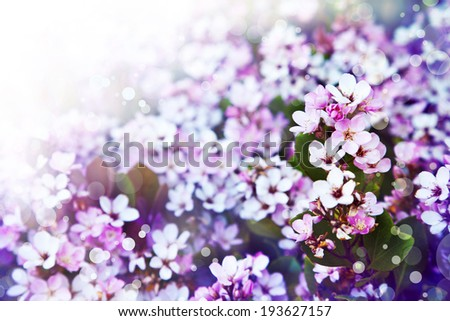Flower background, Beautiful pink flowers made with color filters, spring bloom, retro background - stock photo