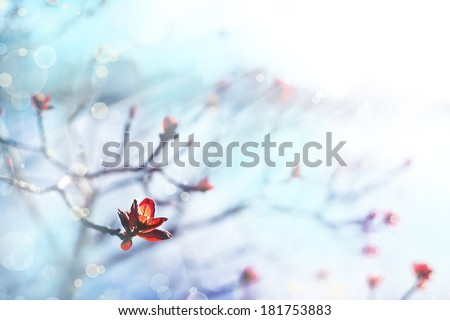 Flower background, Beautiful white flowers made with color filters, spring bloom in front of blue sky - stock photo