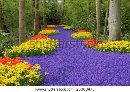 Flower bed, Keukenhof, the Netherlands - stock photo